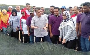 Gallery - Majlis Perasmian Projek Kluster Nanas Lestari (KNAL) Tanah Abang, Mersing