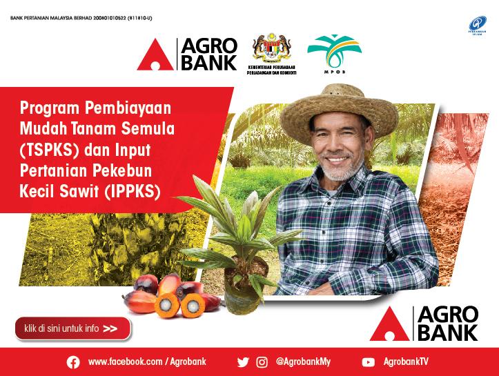 https://www.agrobank.com.my/product/program-pembiayaan-mudah-tanam-semula-tspks-dan-input-pertanian-pekebun-kecil-sawit-ippks/
